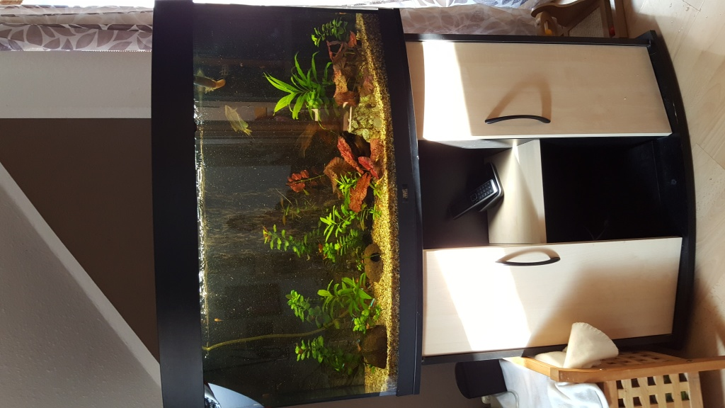 fische aquarien tieranzeigen. Black Bedroom Furniture Sets. Home Design Ideas
