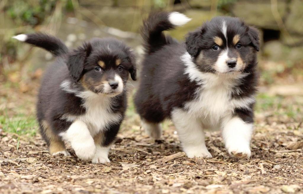 2 hunde kennenlernen Ratingen