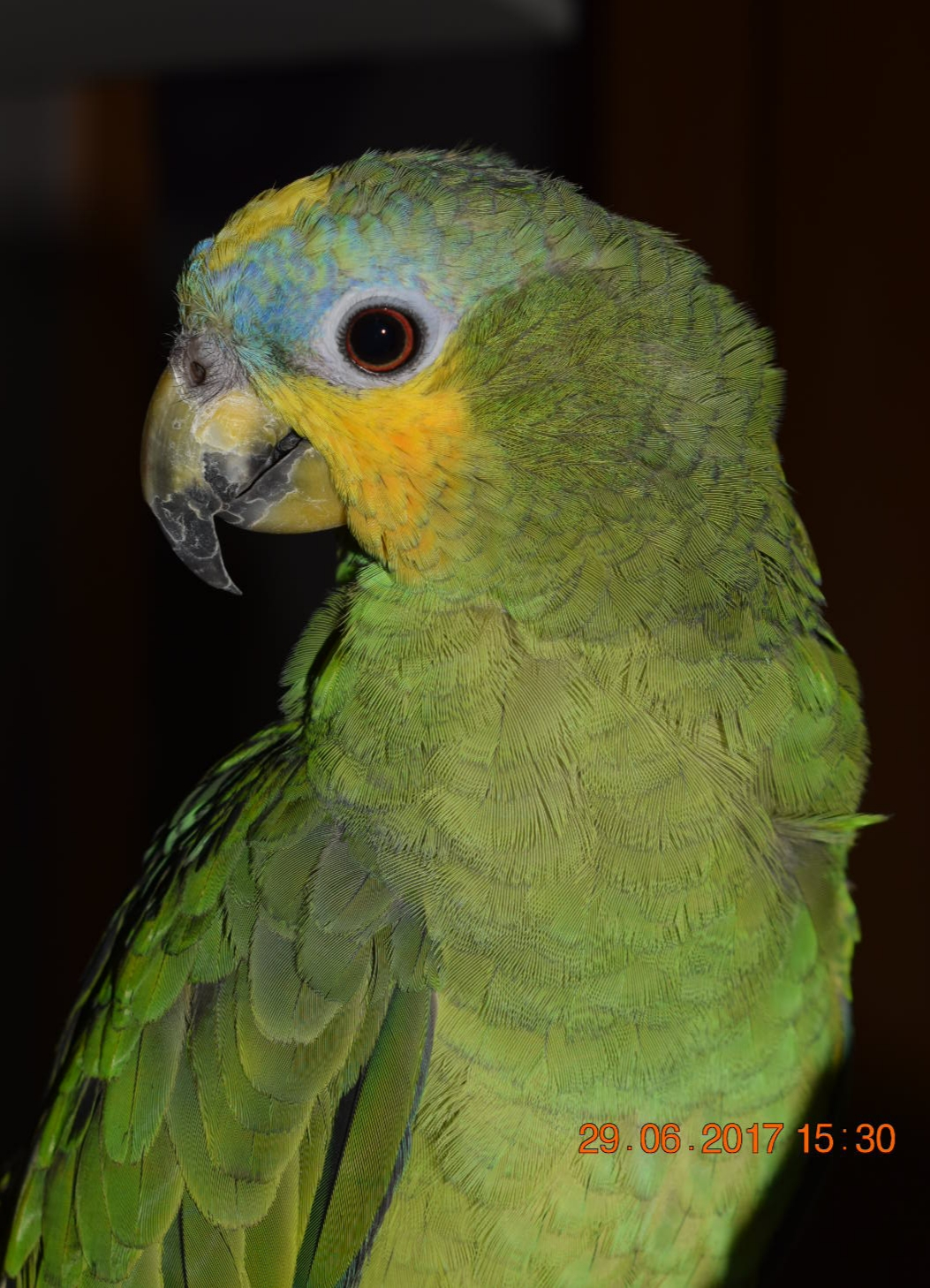 Venezuela Amazone