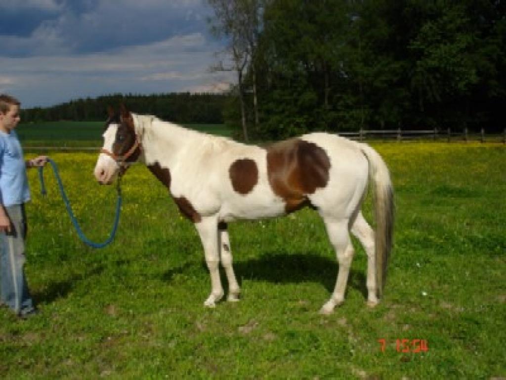 tiere pferde verschenken