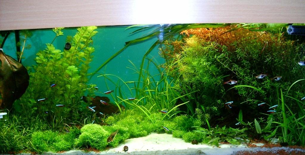 fische aquarien tieranzeigen seite 14. Black Bedroom Furniture Sets. Home Design Ideas
