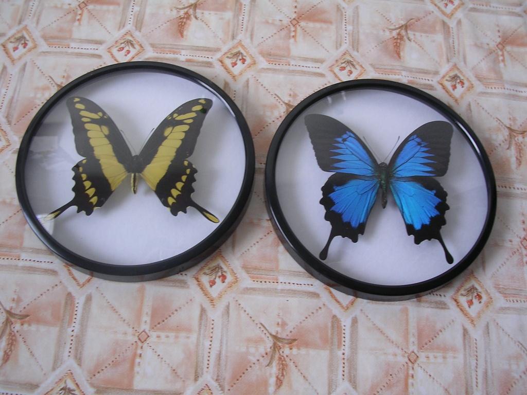 Insekten - Schmetterlinge Tieranzeigen