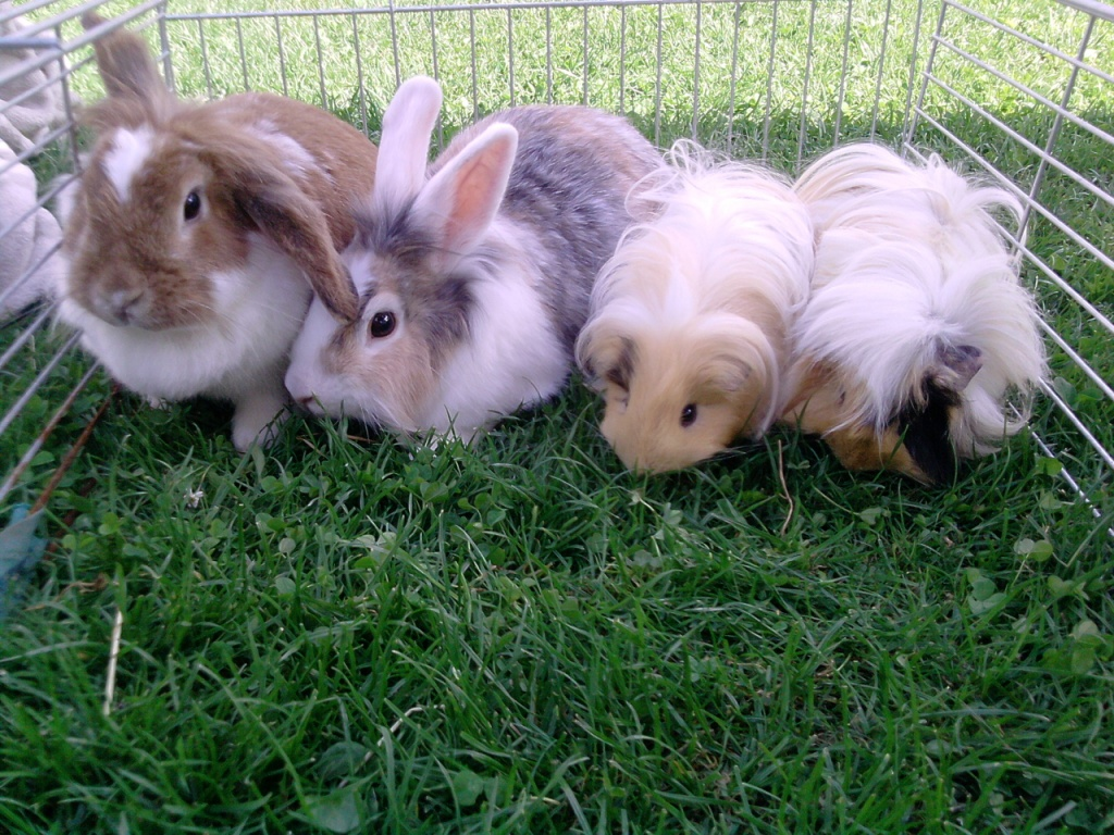 nagetiere kaninchen tieranzeigen seite 19. Black Bedroom Furniture Sets. Home Design Ideas