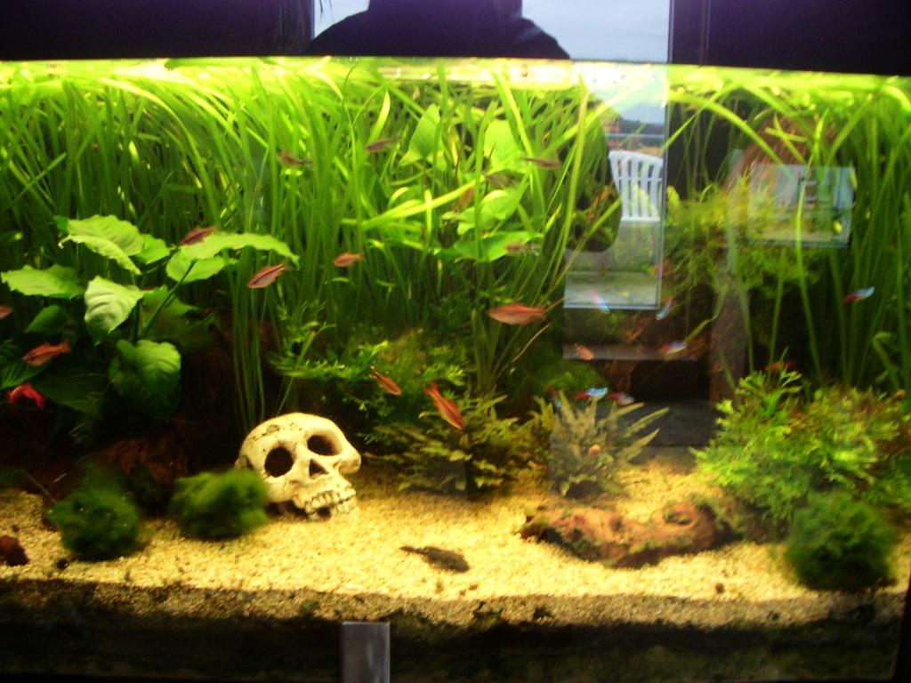 Fische skalare tieranzeigen for Skalar aquarium