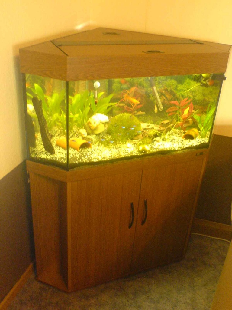 juwel delta 100 eckaquarium aquarium 160 l mit zubeh r aquarien. Black Bedroom Furniture Sets. Home Design Ideas