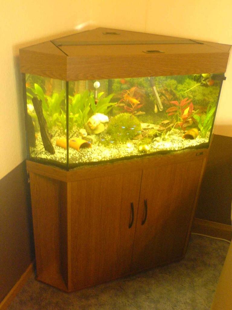tieranzeigen eckaquarium kleinanzeigen. Black Bedroom Furniture Sets. Home Design Ideas