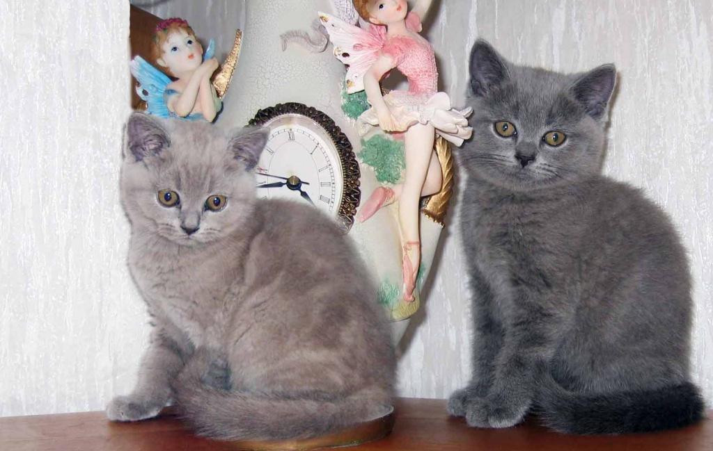 Können Hauskatzen Flöhe Bekommen