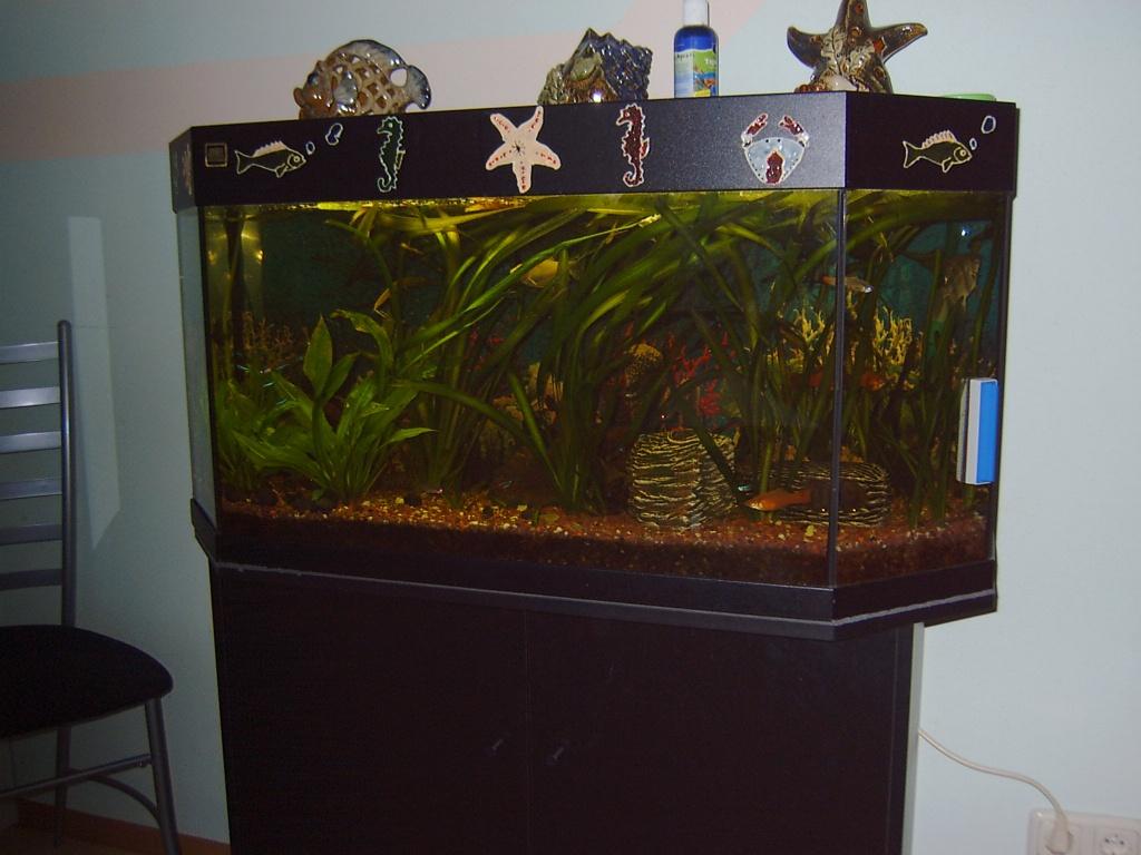 aquarium 6 eck 160 l juwel aquarien. Black Bedroom Furniture Sets. Home Design Ideas