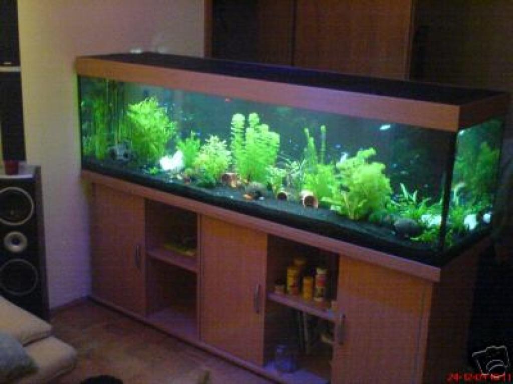 fische aquarien tieranzeigen seite 17. Black Bedroom Furniture Sets. Home Design Ideas