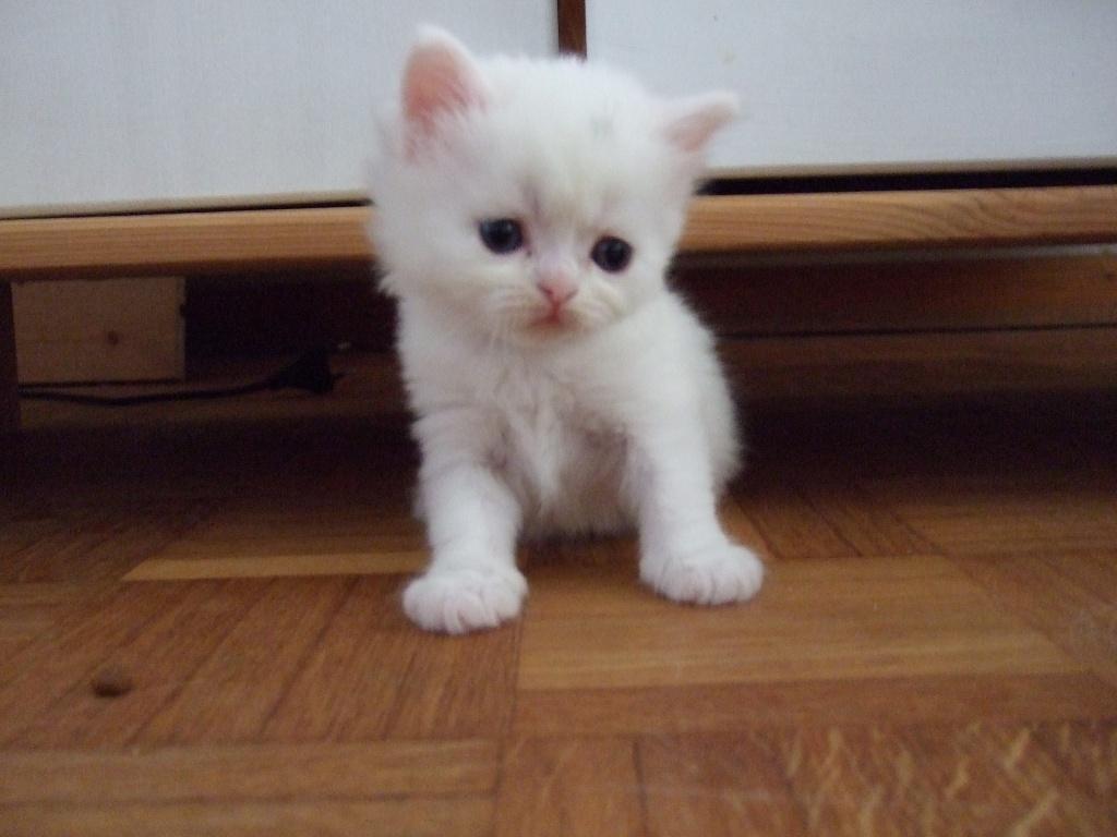 Tieranzeigen katzenbabys kleinanzeigen - Bilder verschenken ...