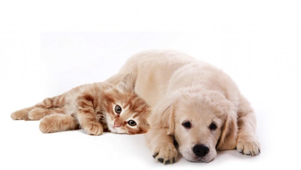 rundumfutter f r hund katz sucht vertriebspartner zubeh r. Black Bedroom Furniture Sets. Home Design Ideas