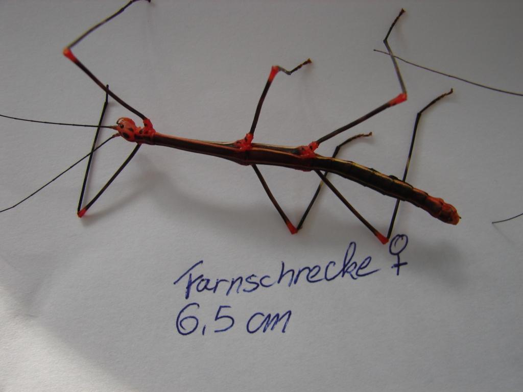 Insekten tieranzeigen seite 18 for Kleine teichfische arten