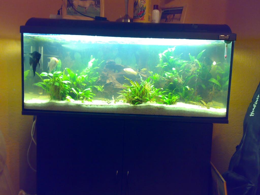 fische aquarien tieranzeigen seite 9. Black Bedroom Furniture Sets. Home Design Ideas