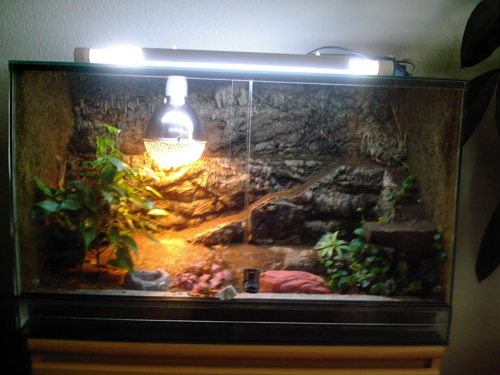 terrarium 80x40x50 mit bibrongeckop rchen geckos. Black Bedroom Furniture Sets. Home Design Ideas