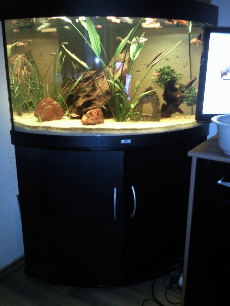 juwel trigon 190 l neuwertig au enfilter wurzel gestein eckaquarium aquarien. Black Bedroom Furniture Sets. Home Design Ideas
