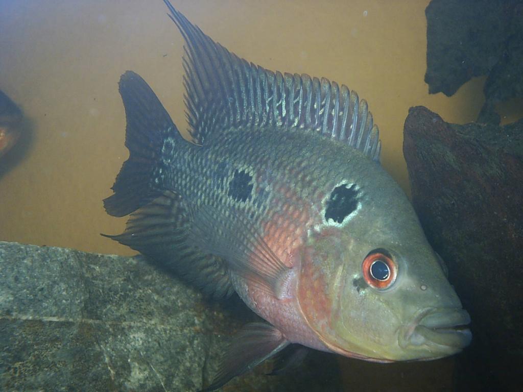 Tieranzeigen jungfische kleinanzeigen for Aquarium fische arten