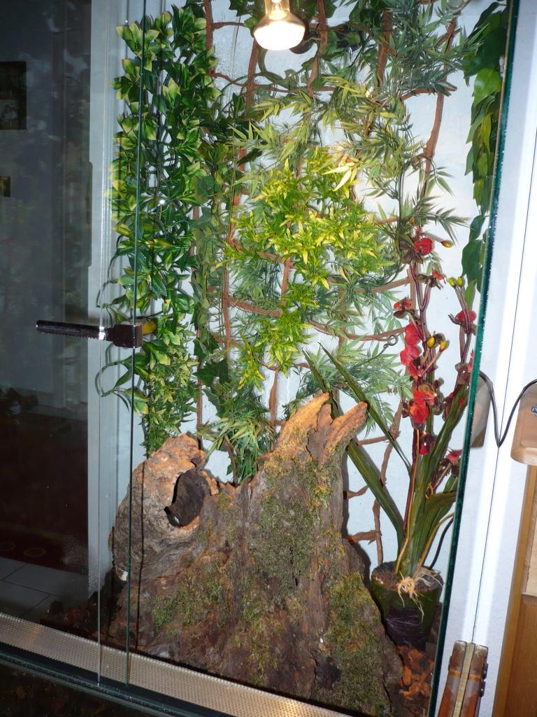reptilien schlangen schlangen sonstige tieranzeigen seite 5. Black Bedroom Furniture Sets. Home Design Ideas