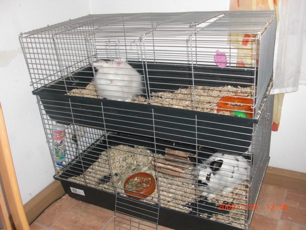 tieranzeigen zwergkaninchen kleinanzeigen. Black Bedroom Furniture Sets. Home Design Ideas