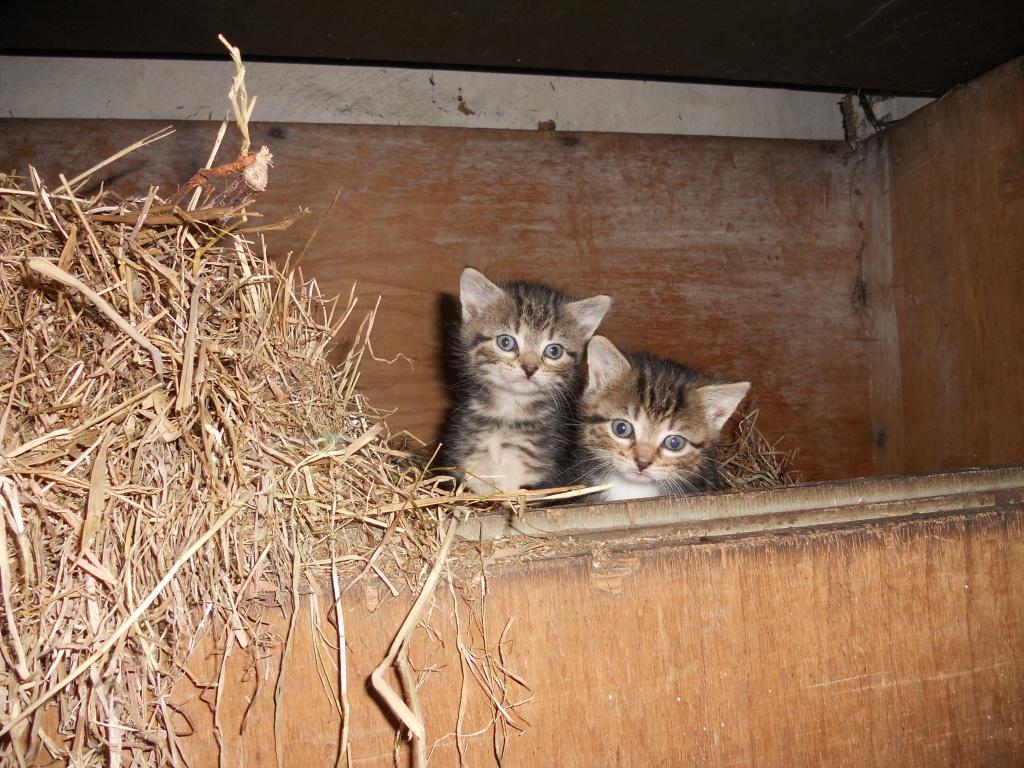 Tieranzeigen Katzenbaby Kleinanzeigen