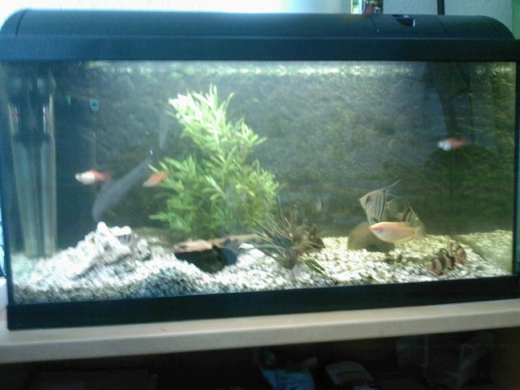 Fische   Aquarien Tieranzeigen Seite 14