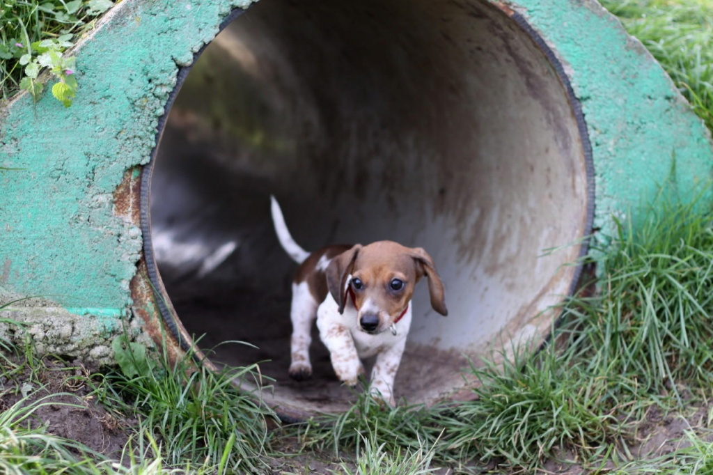 hunde begleiten leben Neu-Ulm