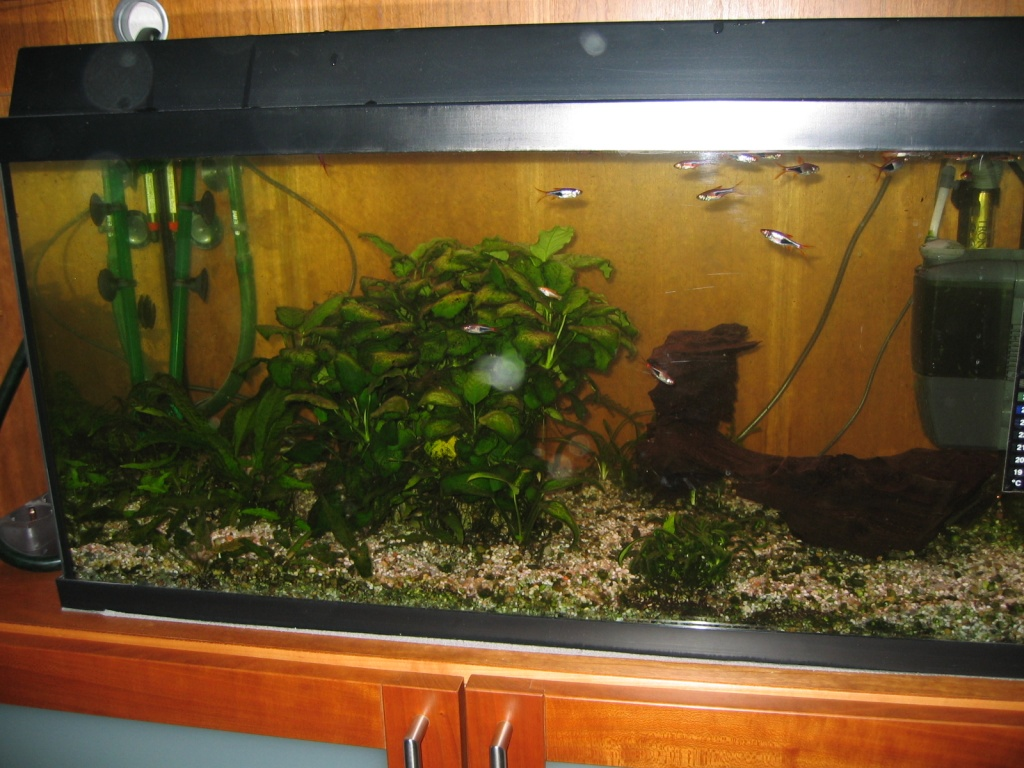 Aquarium 120l Mit Unterschrank : voll eingerichtetes aquarium 120l mit fischen und unterschrank zu verkaufen aquarien ~ Frokenaadalensverden.com Haus und Dekorationen