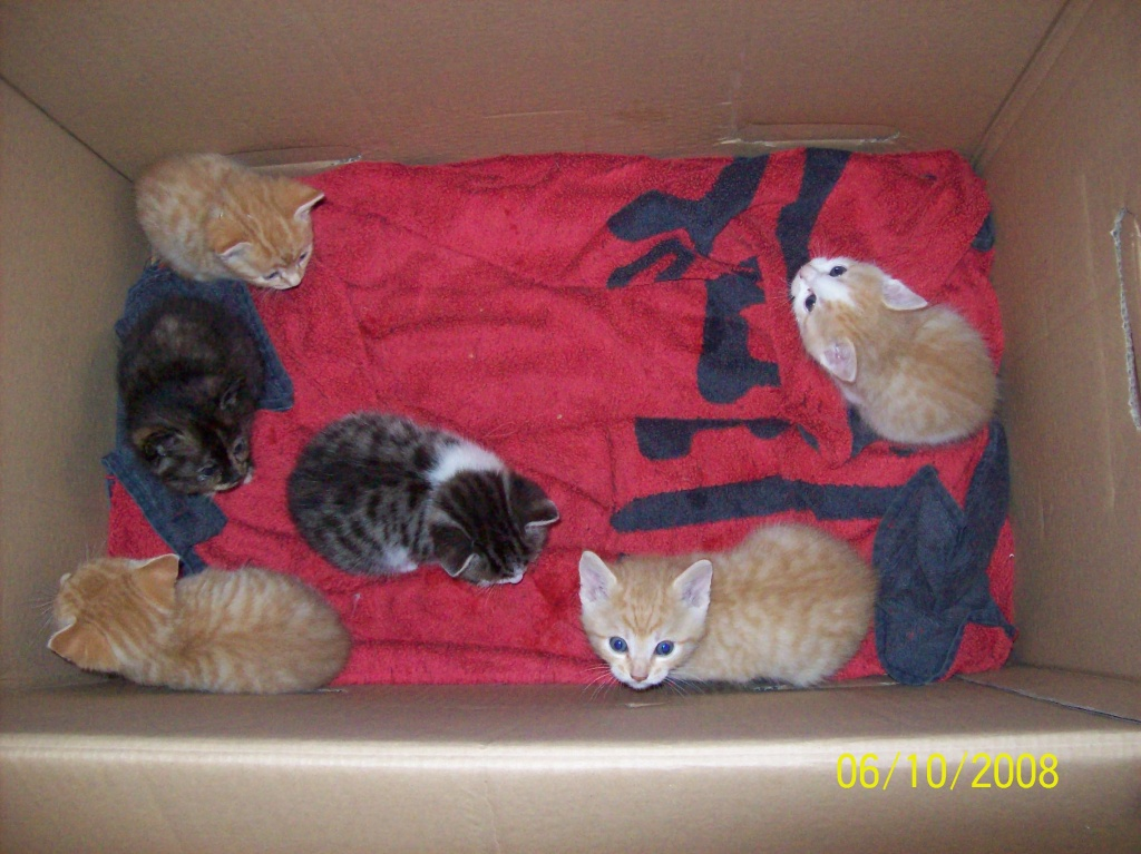 rote katzenbabys abzugeben