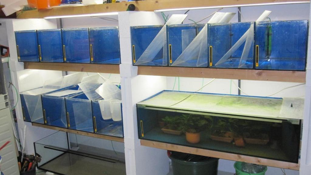 zuchtanlage f r zierfische aquarien. Black Bedroom Furniture Sets. Home Design Ideas