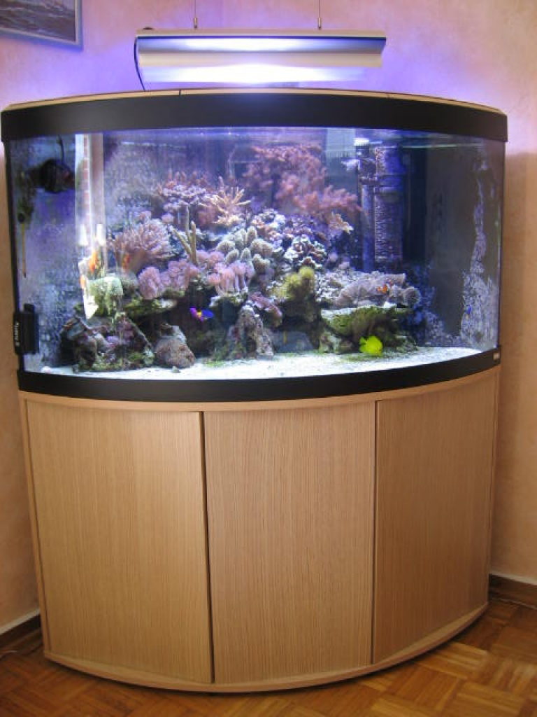 tieranzeigen meerwasseraquarium kleinanzeigen. Black Bedroom Furniture Sets. Home Design Ideas