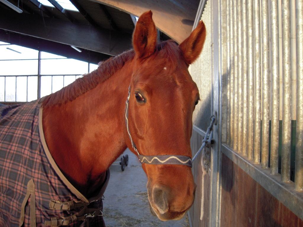 pferden sport freizeit