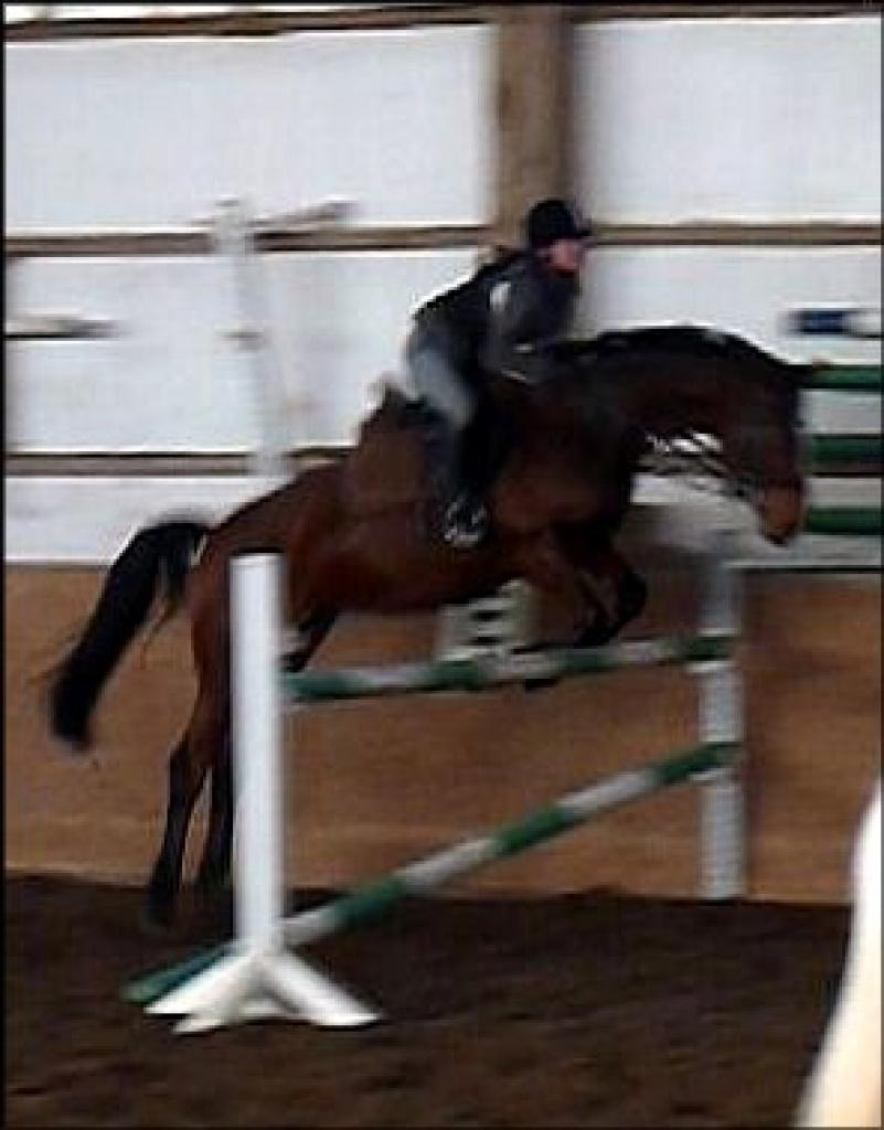 jugendliche reiterin sucht pferd für alles  reitbeteiligung