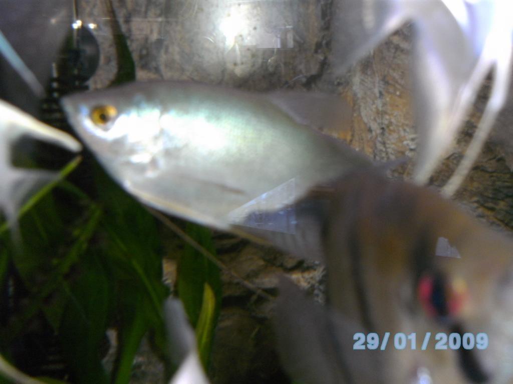 Fische fische sonstige tieranzeigen seite 10 for Suche zierfische