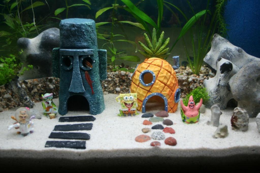 Best 25 Fish Tank Decor Ideas On Pinterest Plant And Tanks