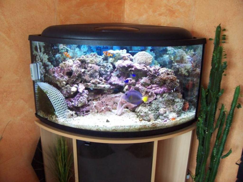 Tieranzeigen s sswasser kleinanzeigen for Salzwasser aquarium fische