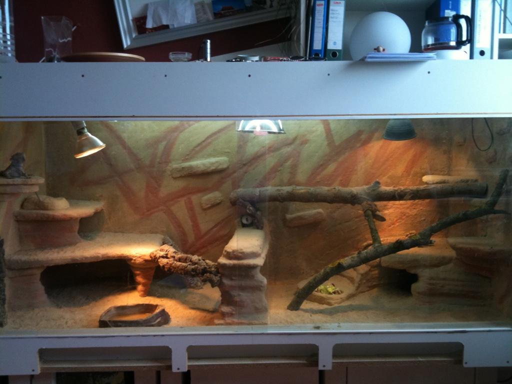 Bartagame Terrarium Licht : Bartagamen Terrarium abzugeben Reptilien Bartagame