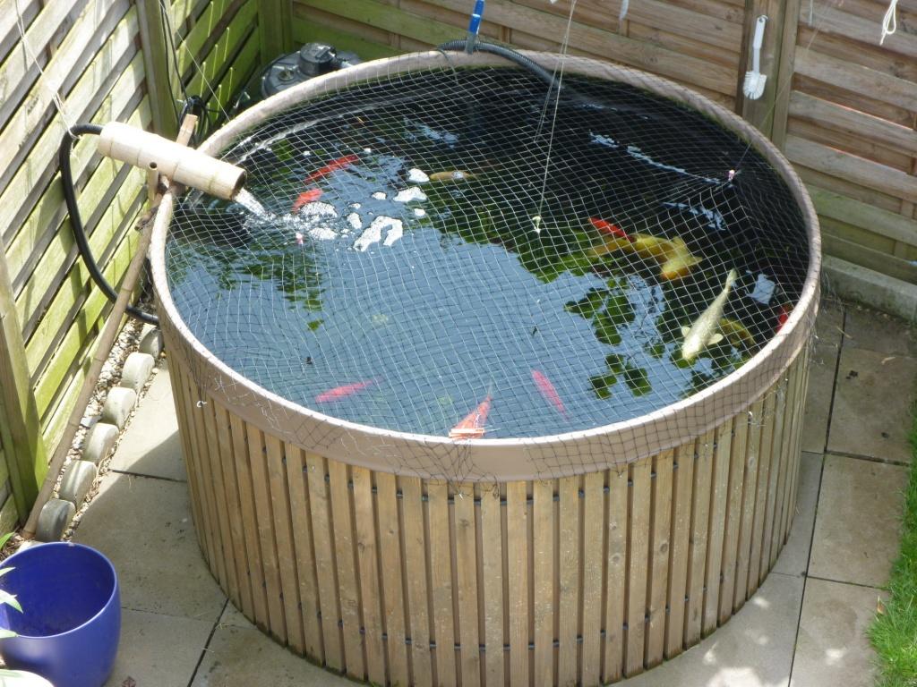 Tieranzeigen teichpumpe kleinanzeigen for Kois und goldfische in einem teich