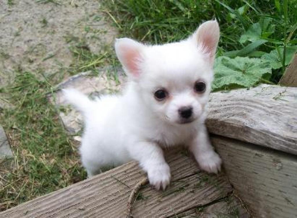 hundewelpen kostenlos zu verschenken