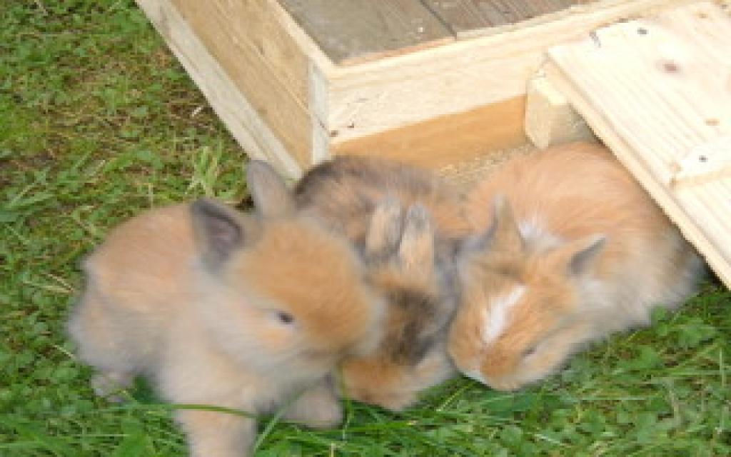 nagetiere kaninchen tieranzeigen seite 38. Black Bedroom Furniture Sets. Home Design Ideas