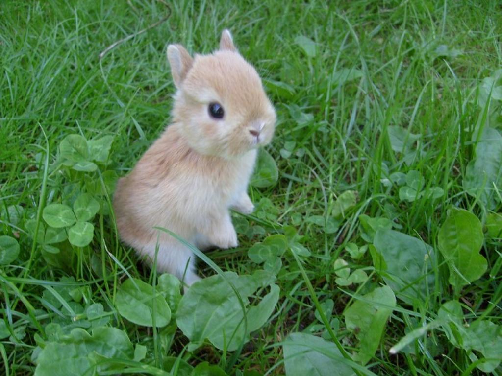 kleiner kaninchenmann sucht neues zuhause kaninchen. Black Bedroom Furniture Sets. Home Design Ideas