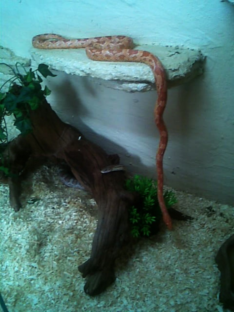 Reptilien  Schlangen Tieranzeigen Seite 23