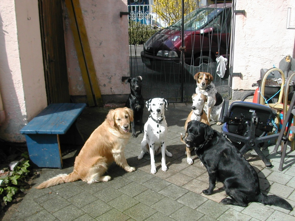 Tieranzeigen Hundeurlaub Kleinanzeigen