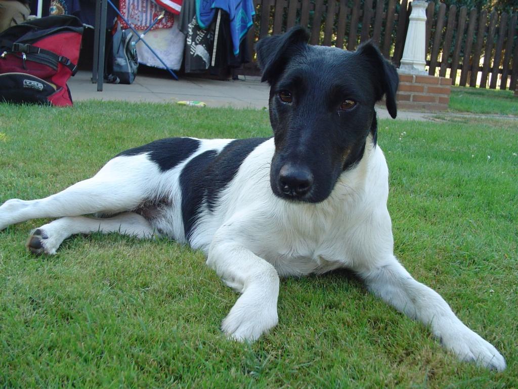 Hunde Rassehunde Terrier Tieranzeigen Seite 21