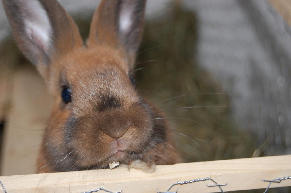 zwei s e kaninchen abzugeben kaninchen. Black Bedroom Furniture Sets. Home Design Ideas