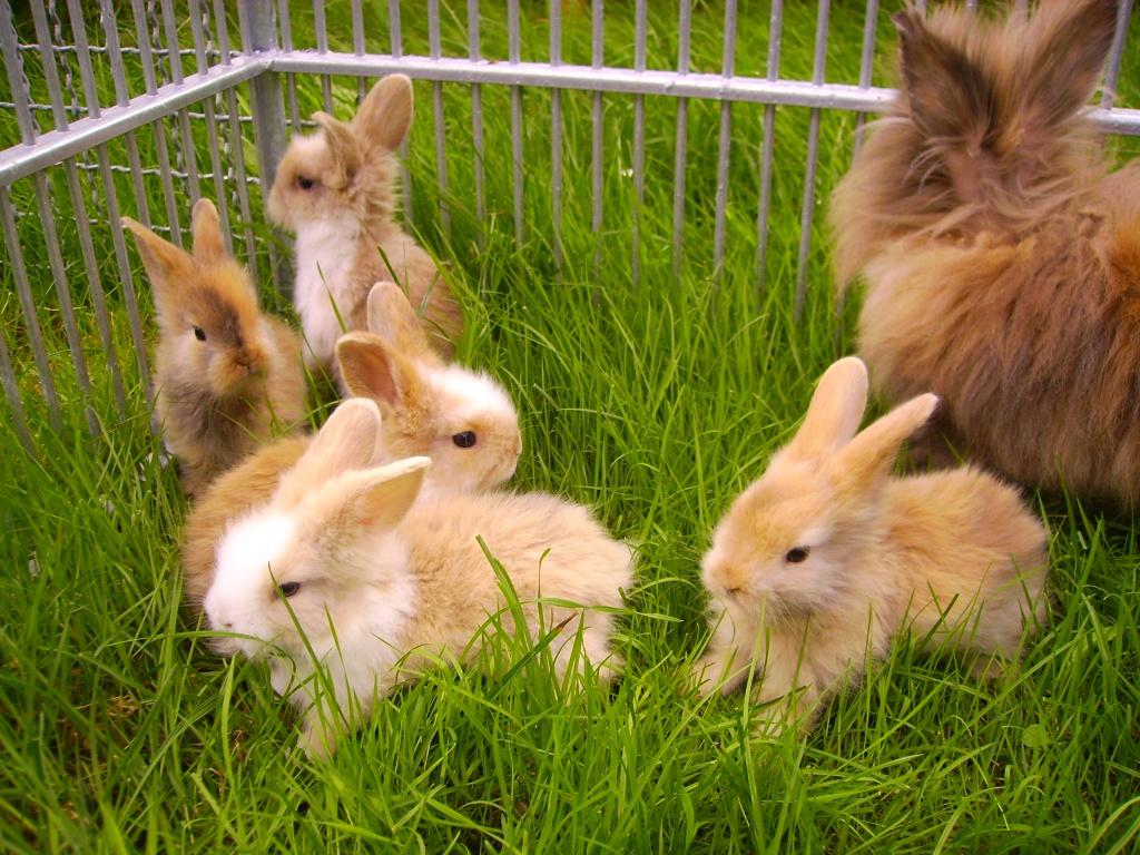 Tieranzeigen Kaninchengesellschaft Kleinanzeigen