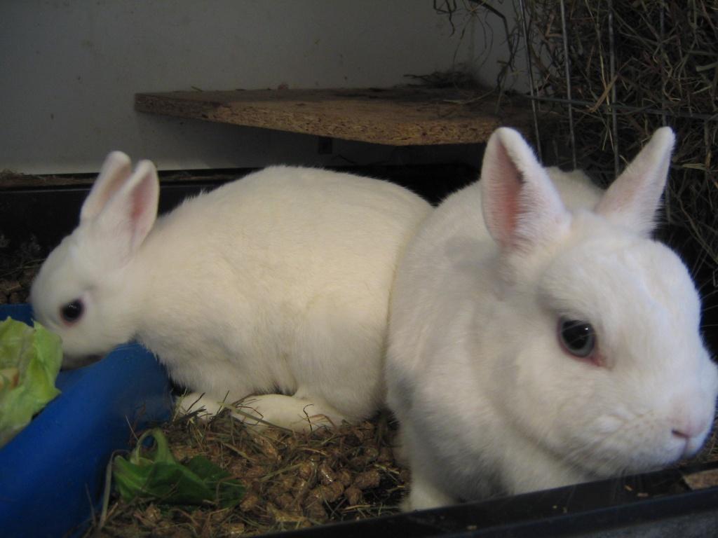 nagetiere kaninchen tieranzeigen seite 55. Black Bedroom Furniture Sets. Home Design Ideas