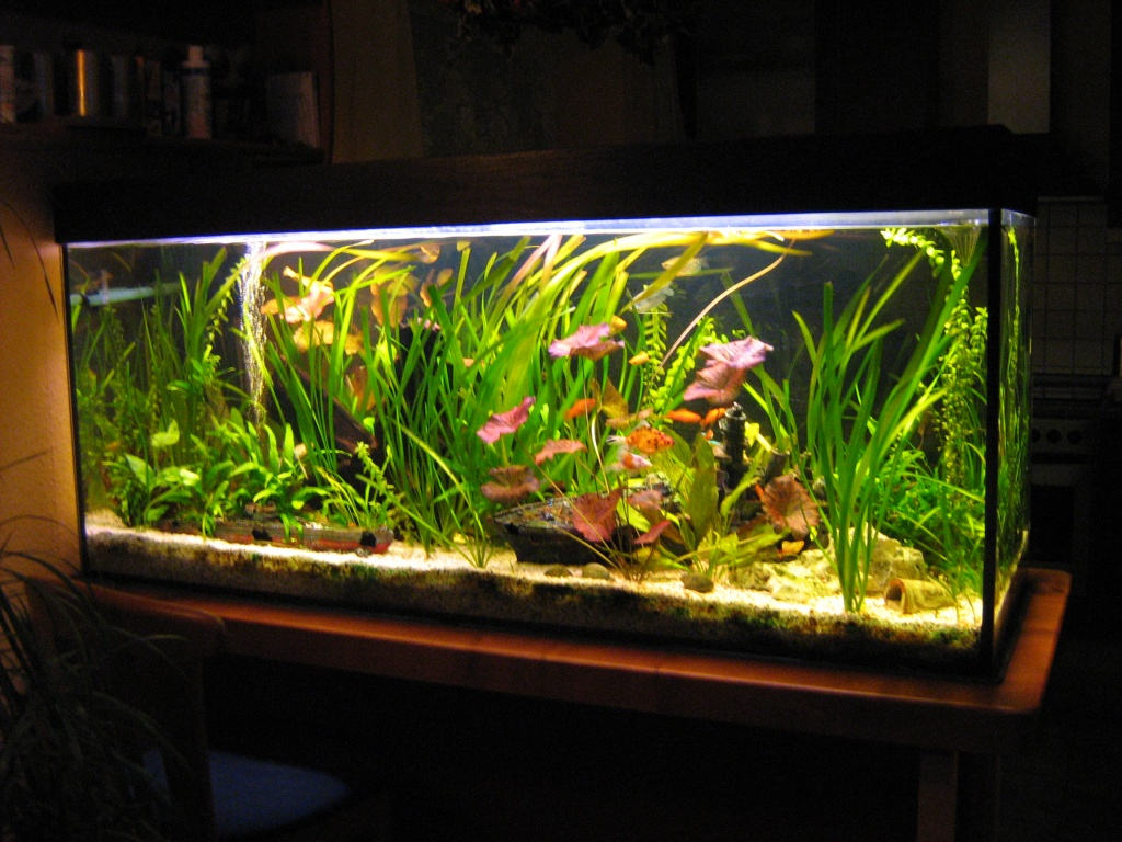 450l aquarium komplett mit viel zubeh r aquarien. Black Bedroom Furniture Sets. Home Design Ideas