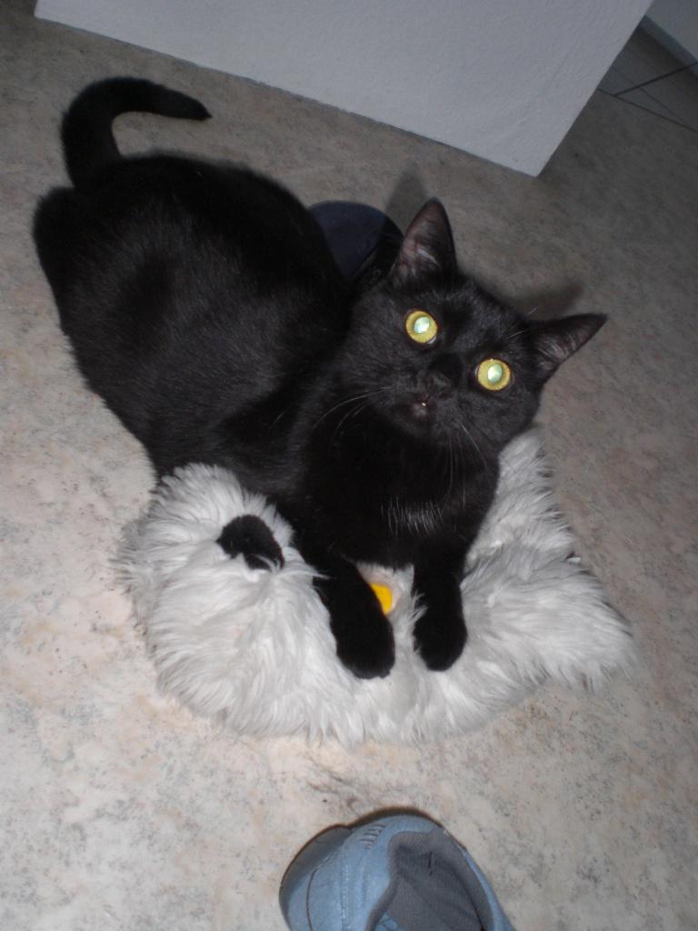 suche f r meine katze ein neues zuhause hauskatzen. Black Bedroom Furniture Sets. Home Design Ideas